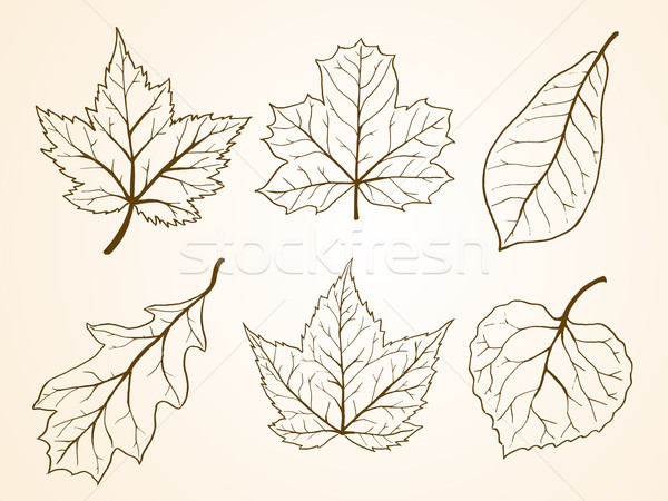 Leaf Sketch Stock photo © kuzzie