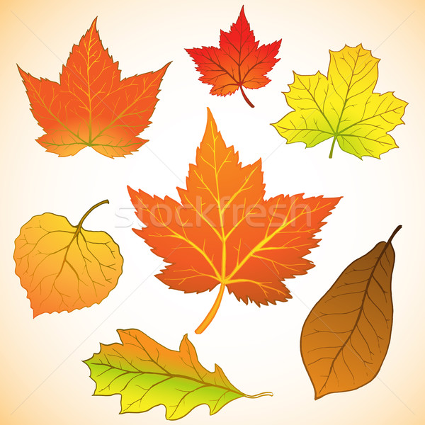 Set foglie illustrazione albero natura Foto d'archivio © kuzzie
