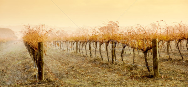 Vineyard Rain Stock photo © kwest
