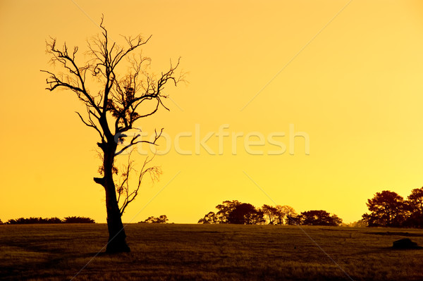 Lone Tree Landscape Stock photo © kwest