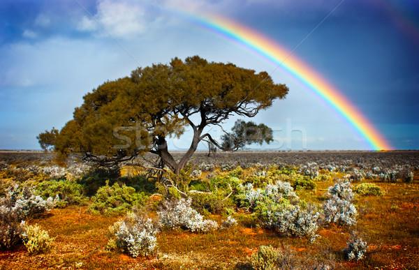 Regenboog boom woestijn hemel wolken Stockfoto © kwest