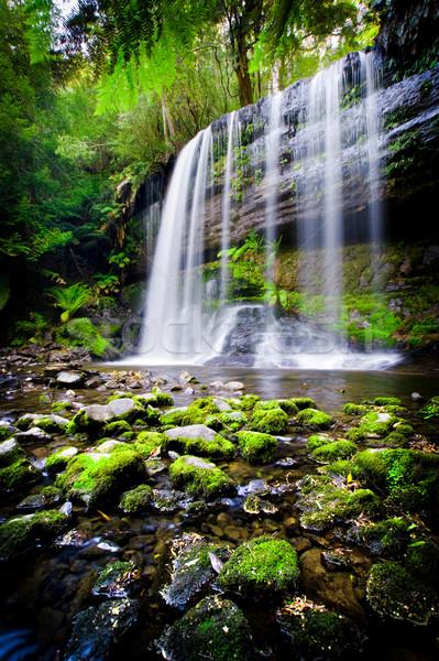 Lenyűgöző vízesés Tazmánia Ausztrália fa tájkép Stock fotó © kwest