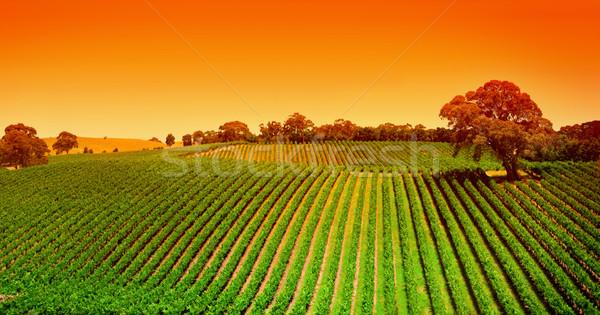 Wijngaard heuvels zonsopgang adelaide hemel wolken Stockfoto © kwest
