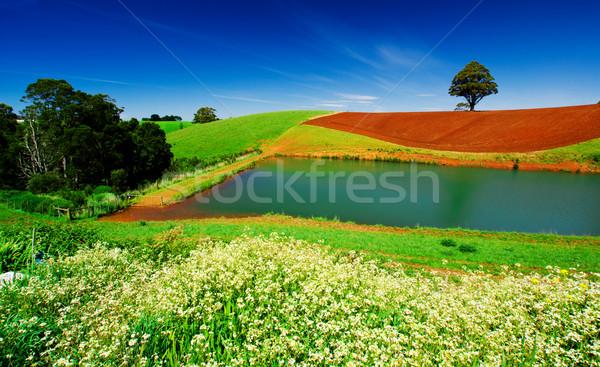 Veld kleur landelijk tasmanië Australië hemel Stockfoto © kwest
