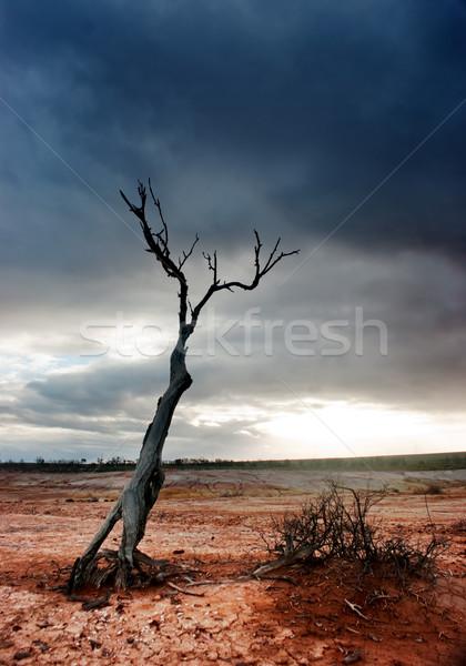 Kidőlt fa sivatag elhagyatott fa Föld sziluett Stock fotó © kwest