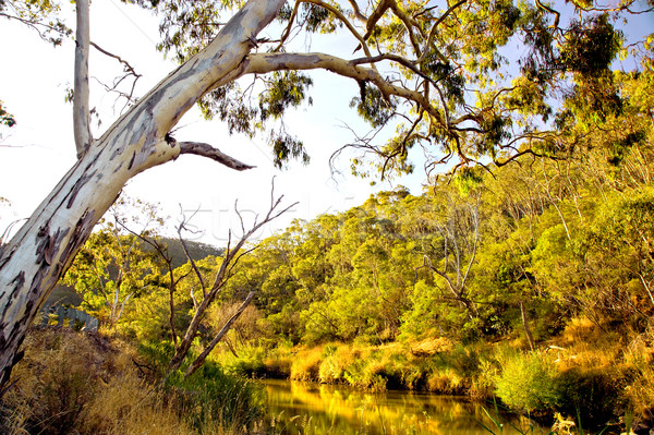 Cudlee Creek Stock photo © kwest