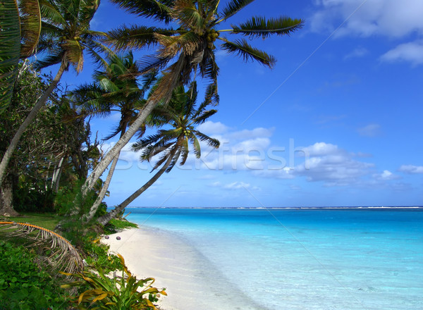 Isla tropicales escénico agua árbol naturaleza Foto stock © kwest