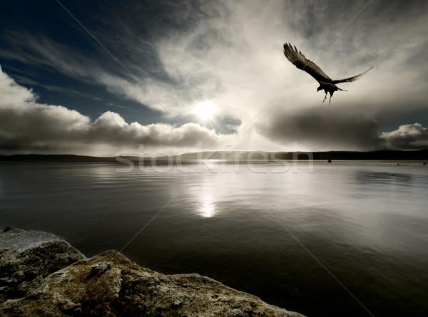 Szeszélyes kikötő madár alkonyat felhők nap Stock fotó © kwest