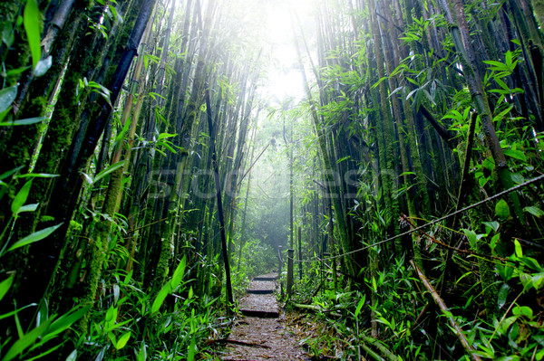 Bamboo Forest Stock photo © kwest