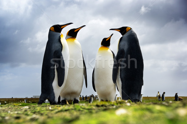 Yürütme komite kral ayakta birlikte aile Stok fotoğraf © kwest