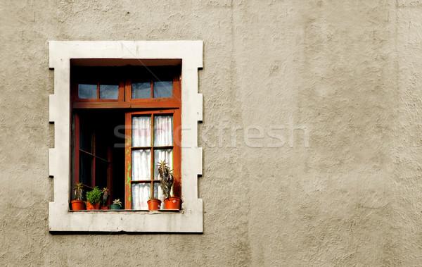 Venster Chili exemplaar ruimte reizen baksteen planten Stockfoto © kwest
