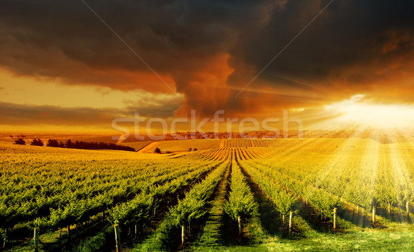 Incroyable vignoble coucher du soleil belle adelaide collines Photo stock © kwest