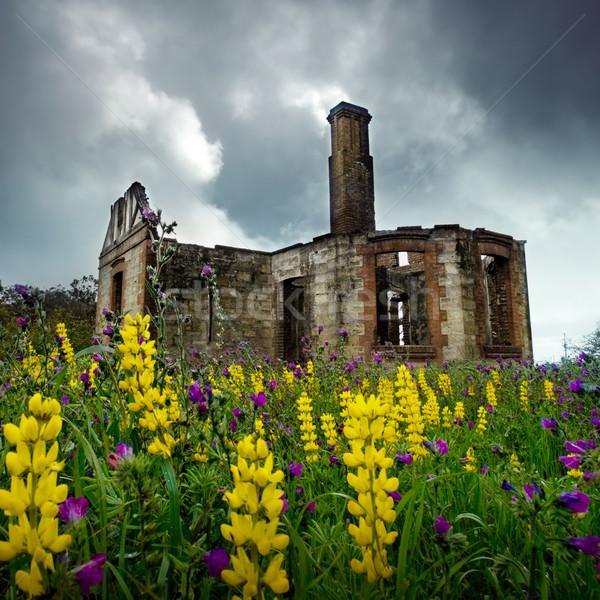 Virágmintás romok vad virágok fúj szellő öreg Stock fotó © kwest
