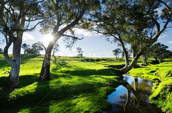 стране потока Аделаида холмы пейзаж весны Сток-фото © kwest