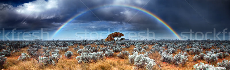 Woestijn hoop regenboog australisch boom natuur Stockfoto © kwest