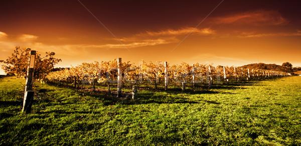 Сток-фото: виноградник · закат · осень · пейзаж · красоту