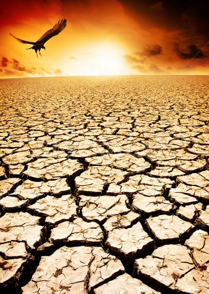 Klímaváltozás madár elhagyatott repedt Föld tájkép Stock fotó © kwest