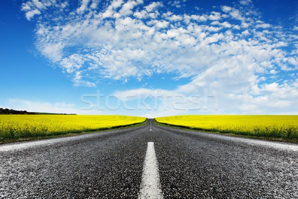 Canola Road Stock photo © kwest