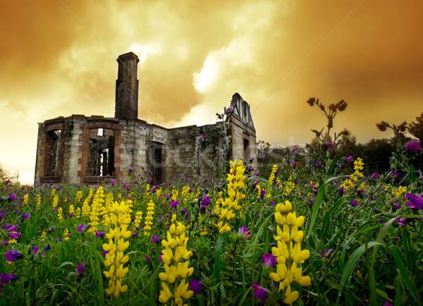 цветочный руин ветер старые Сток-фото © kwest