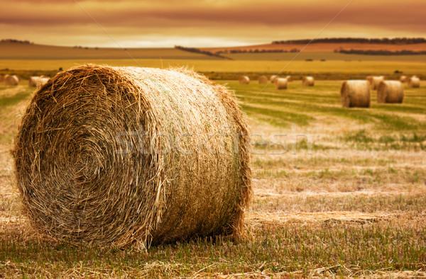 Széna bála farm fókusz előtér vidéki Stock fotó © kwest