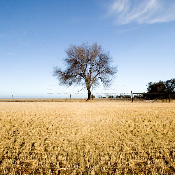 Farm vidéki táj félsziget Dél-Ausztrália fa nyár Stock fotó © kwest