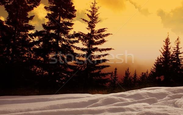 Naplemente erdő gyönyörű tél nap természet Stock fotó © kwest