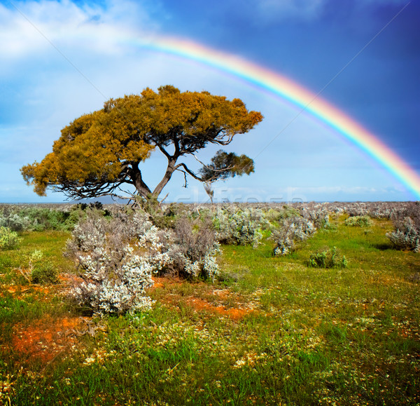 Színek szivárvány egyedüli fa természet fény Stock fotó © kwest