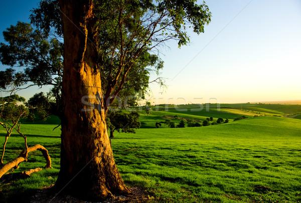 Stock fotó: Ausztrál · vidéki · táj · alkonyat · vidéki · Ausztrália · tavasz