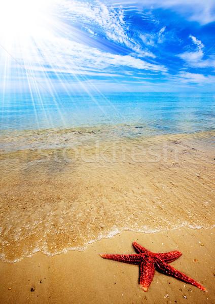 Zeester strand groot Rood prachtig zomer Stockfoto © kwest