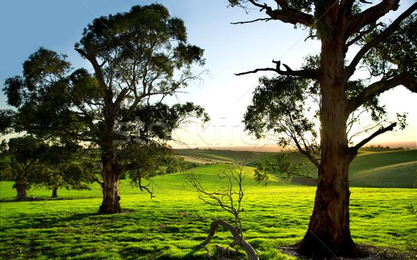 Zöld legelő gyönyörű fák tavasz fű Stock fotó © kwest