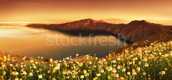 Gündoğumu kır çiçekleri santorini adası çiçekler bahar doğa Stok fotoğraf © kwest