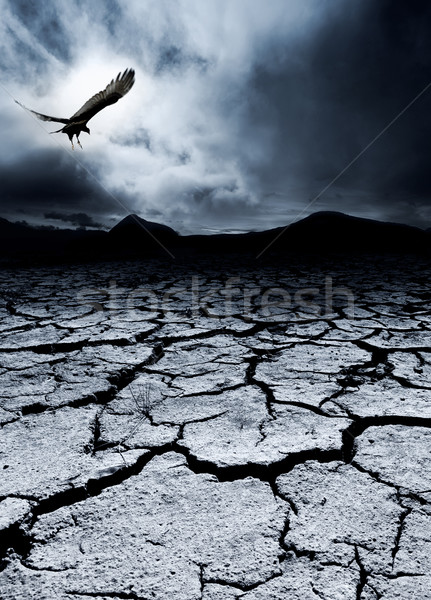 Mort destruction oiseau paysage fond Photo stock © kwest