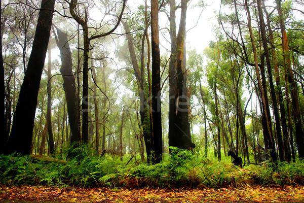 Bos landschap achtergrond bomen reizen bladeren Stockfoto © kwest