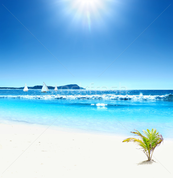 Stock photo: Tropical Horizons