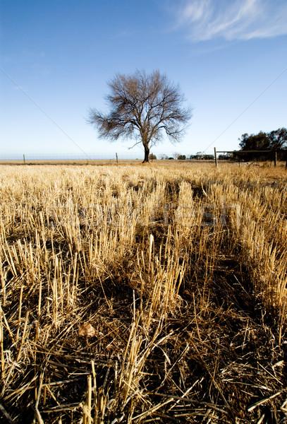 Gyönyörű vidéki jelenet alkonyat fa nyár utazás Stock fotó © kwest