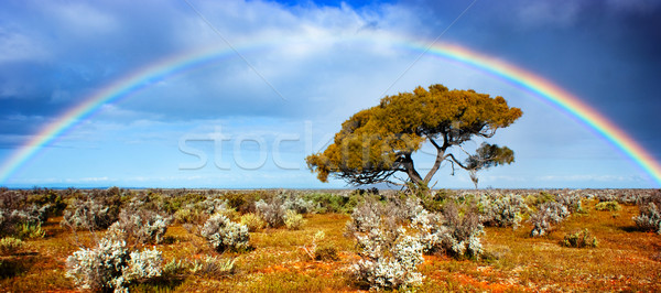 Rainbow Glory Stock photo © kwest