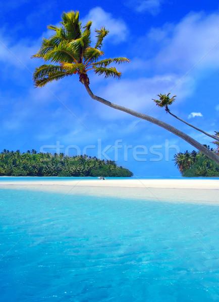 Palmiye ağaç bulutlar okyanus mavi Stok fotoğraf © kwest