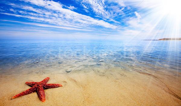 Zeester paradijs zon stralen mooie Stockfoto © kwest