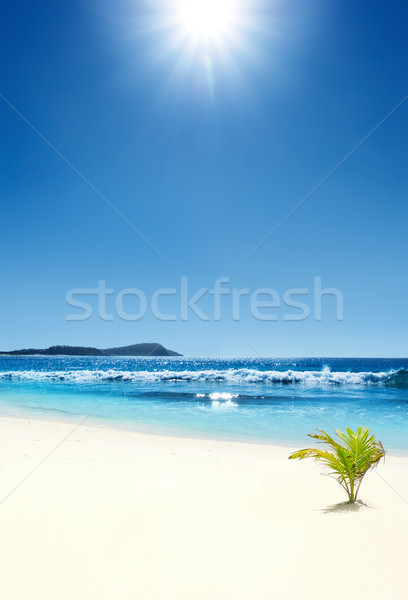 Photo stock: Tropicales · plage · tropicale · bébé · Palm · ciel