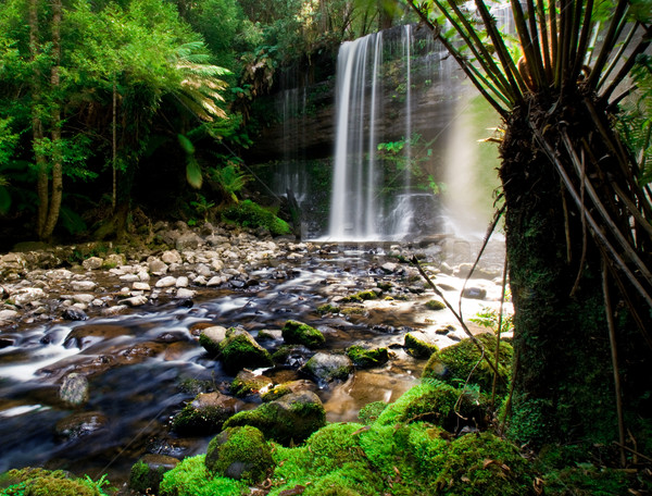 Mooie tasmanië Australië hout landschap bomen Stockfoto © kwest