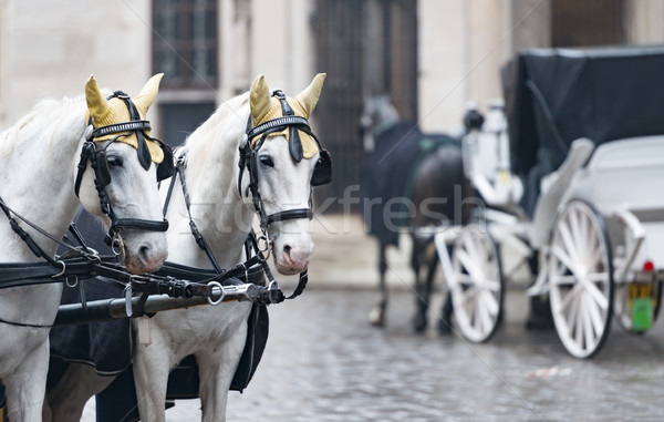 Horses and carriage on stefansplatz in Vienna. Stock photo © kyolshin