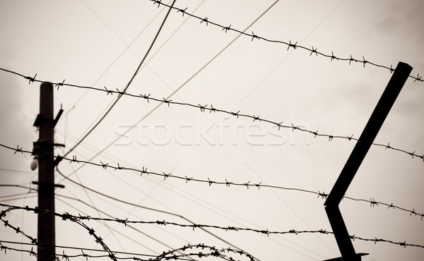 barbwire Stock photo © kyolshin