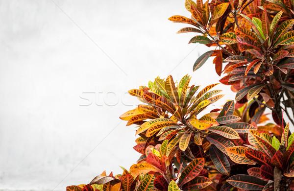Exuberante planta diferente colores blanco pared Foto stock © kyolshin