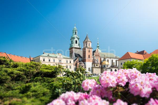 мнение собора Краков Польша красивой старые Сток-фото © kyolshin
