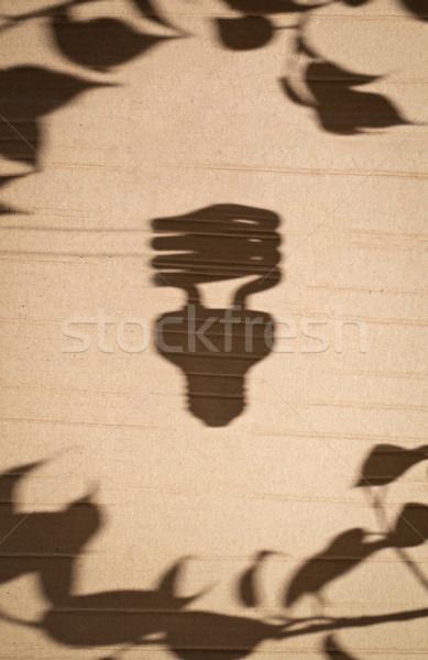 Fluorescente albero foglie ombra cartone Foto d'archivio © kyolshin