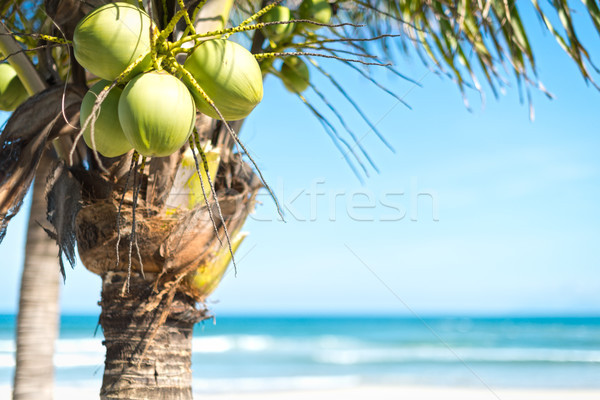 Coconut palm with sky and ocean background. Stock photo © kyolshin