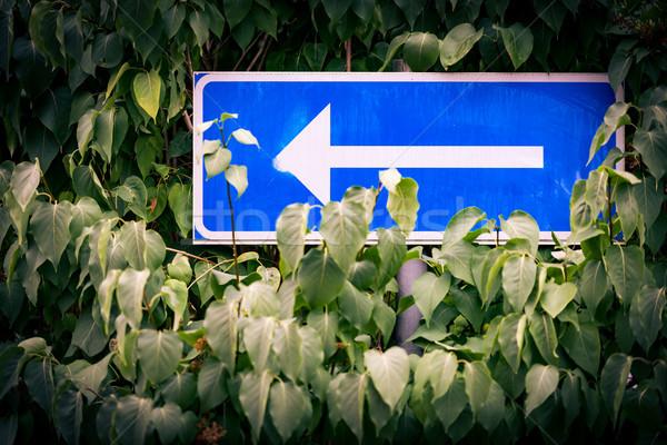 Seta placa sinalizadora árvore branco azul rua Foto stock © kyolshin
