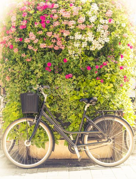 自転車 緑 花 壁 フィンランド ストックフォト © kyolshin