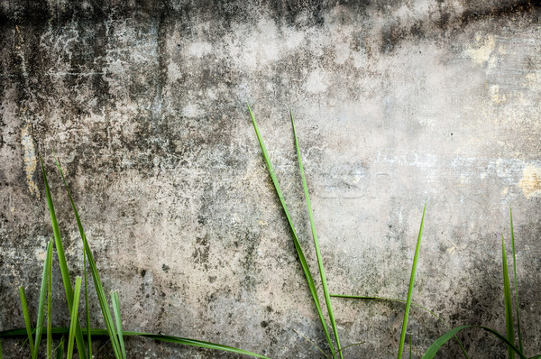 Old dark stone wall of building with green grass. Stock photo © kyolshin