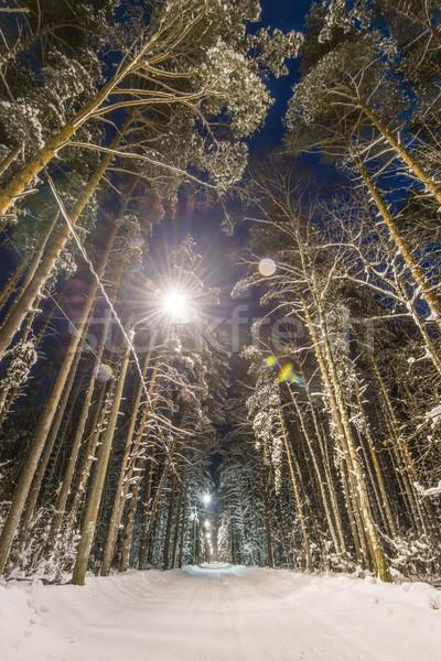 зима лес покрытый снега дороги деревья Сток-фото © kyolshin